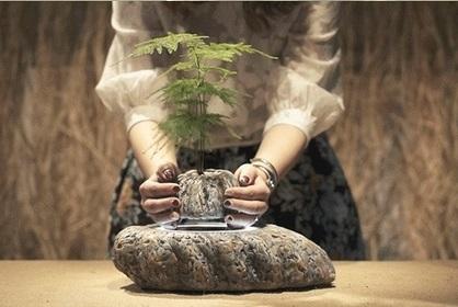 Levitating Bonsai plant