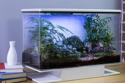 SmartTerra Terrarium