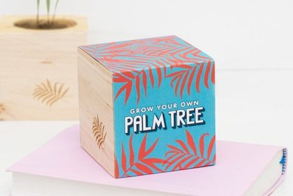 Grow your own Palm Tree