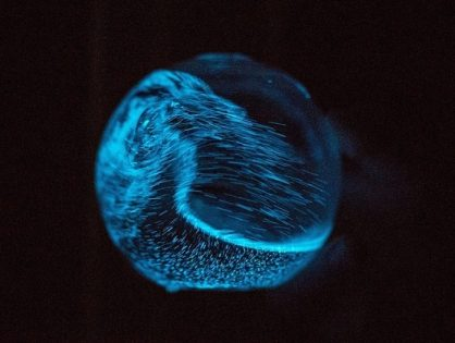 Bioluminescent Sphere